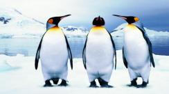 Eşini başka erkekle yakalayan penguenin çıldırması