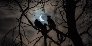 Güneş tutulmasının en güzel 10 fotoğrafı