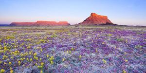 Utah Çölü'nden Akıl Almaz 11 Manzara