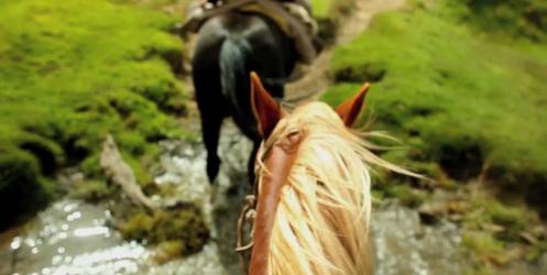 Şili ve Patagonya Arasında Seyahat Etmenin Videolu Hali