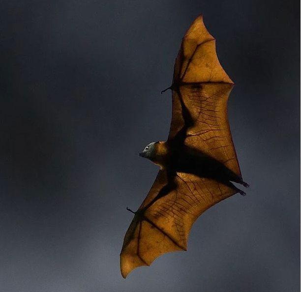 Avustralya'nın doğayla iç içe olduğu gösteren 12 fotoğraf