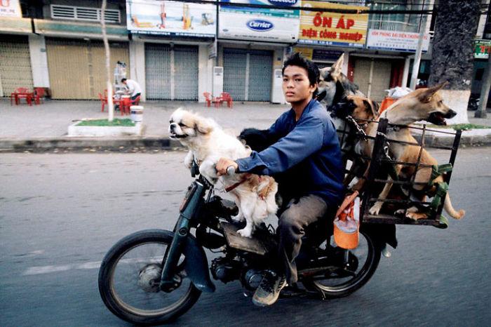 Vitenam'da Motorsikletle Neler Taşıyabilirisiniz?